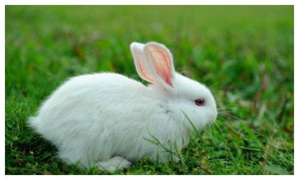 生肖兔:特别是1975年属兔人,6月财运高涨,一定要抓住机会了!