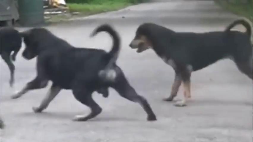 眼鏡蛇遇到了五條狗狗,內心無比絕望,都怪自己太浪了!