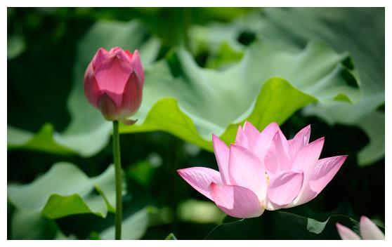 7月下旬,喜鹊报喜,4属相吉星高照,桃花朵朵开,喜事接二连三