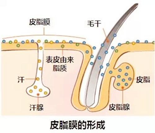 伊的家忠特老师:6个技巧修复受损皮脂膜
