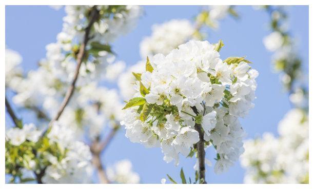 上礼拜,喜鹊绕枝,落花无意,缠缠绵绵,爱情到来,携手到白头