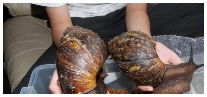 撒盐致3只蜗牛死亡,<a href=