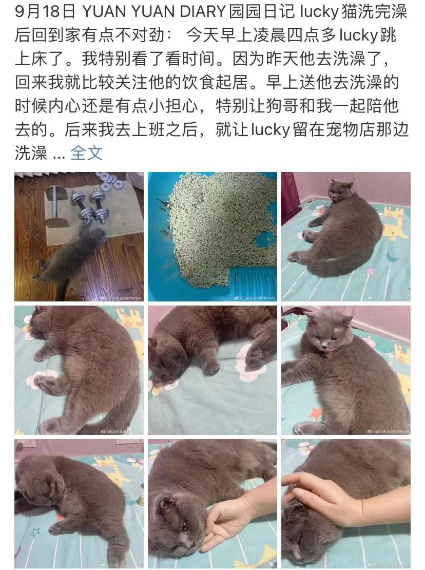 9月18日 园园日记: lucky猫洗完澡后回到家有点不对劲