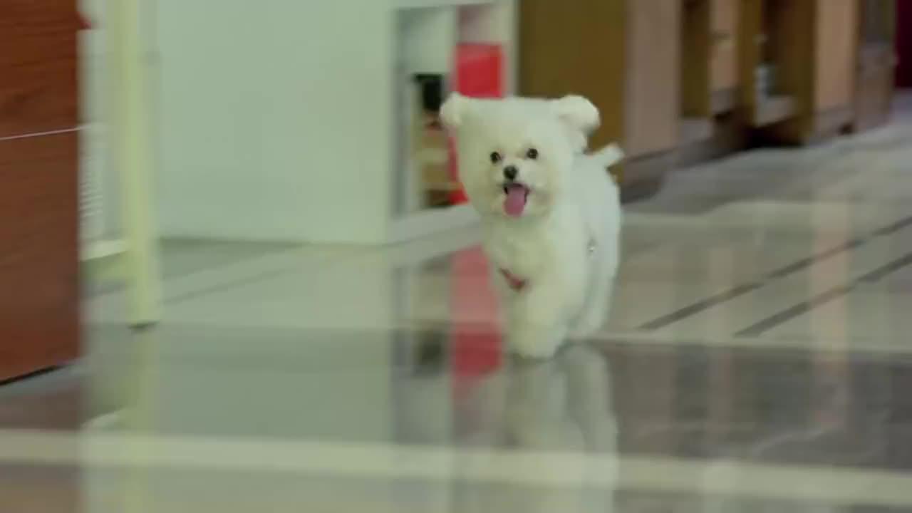 美女正收拾家呢,突然冲出来一只狗,哪料女儿不声不响竟要养狗