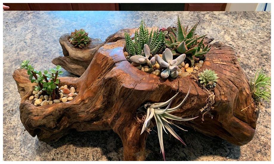 树桩与多肉植物是最配的,用来给花园造景,很有田园气息