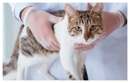 公猫尿结石能彻底治好吗