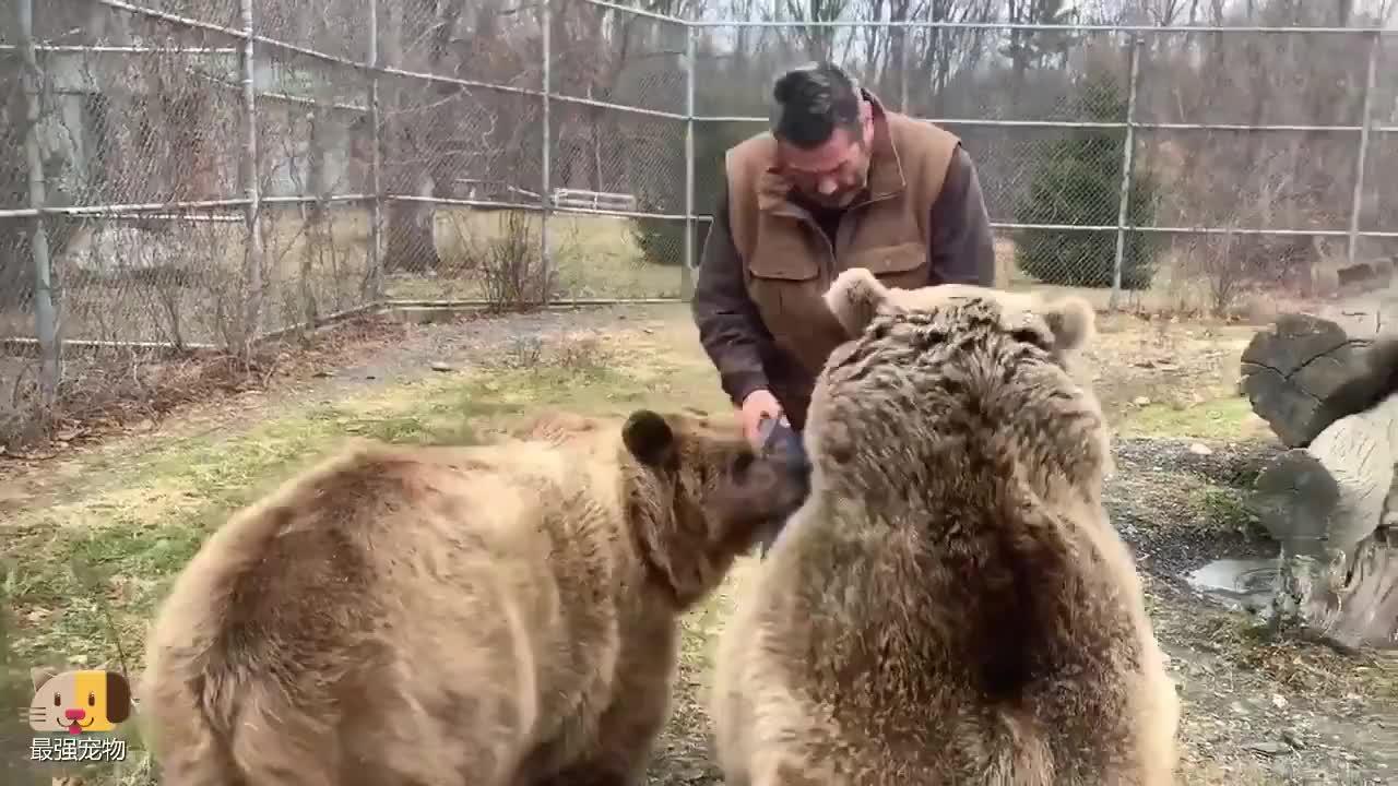 如果年薪10万美元,让你当动物园棕熊饲养员,你愿意吗