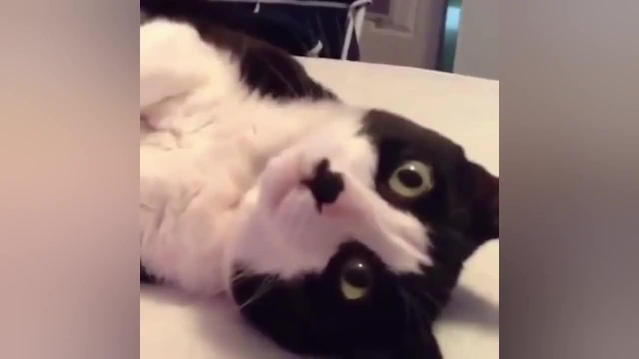 哪有卖这种会聊天的猫,我高低得买一只