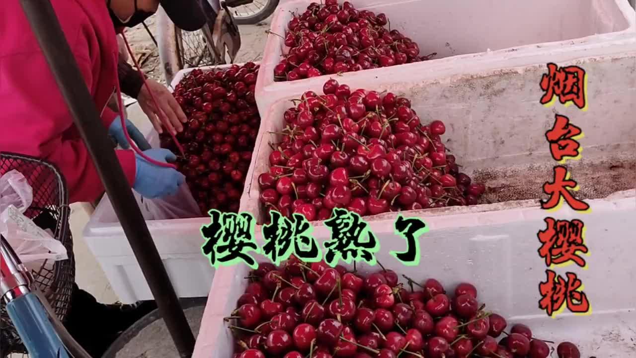 烟台大樱桃陆续上市,今年行情如何?看看早市一斤樱桃卖多少钱