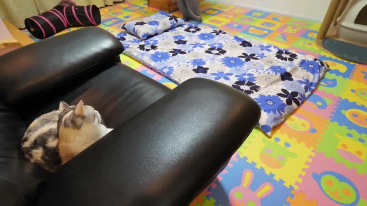 猫咪看到主人要铺被睡觉,猫咪马上过来暖床,这也太懂事了