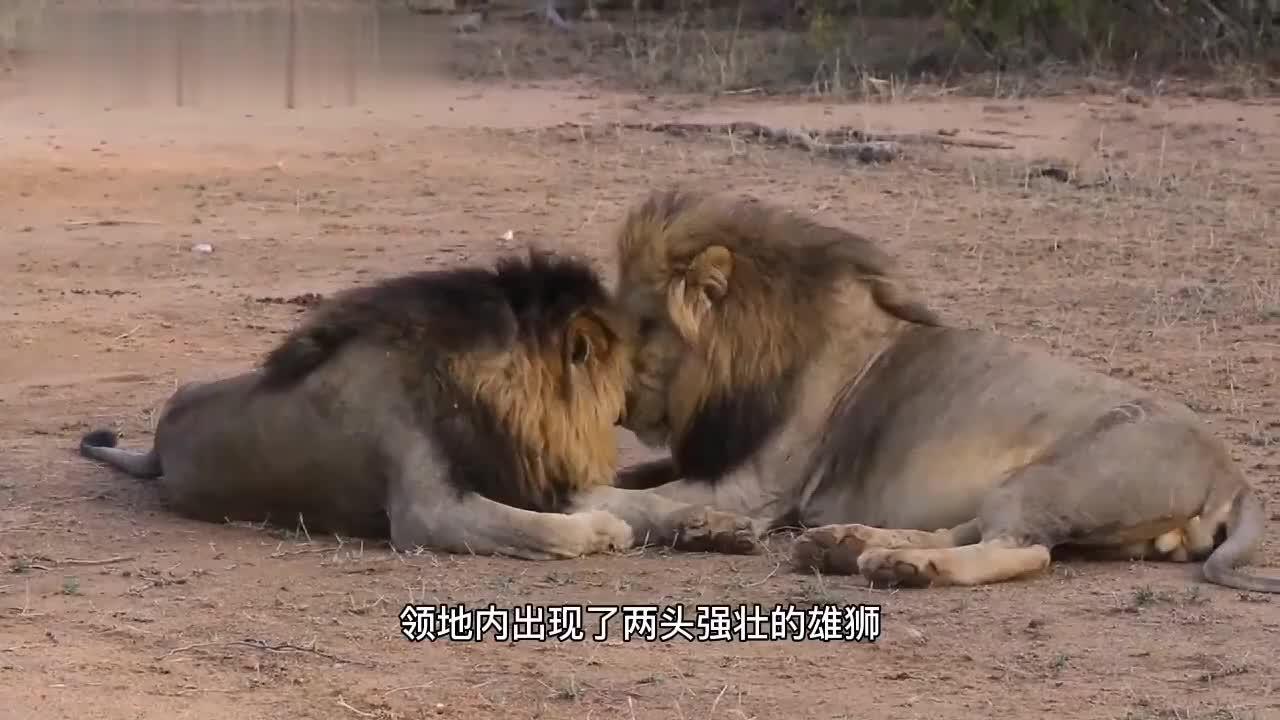 东南雄狮联盟:两头陌生雄狮入侵,危机降临,展现实力的时刻到来