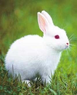 静若处子, 动若脱兔的Lucky