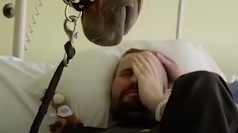 主人生病住院,马儿偷偷跑来看望,动物居然也会如此深情