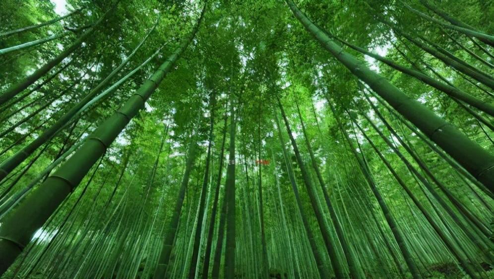 四川有个冷门竹海景区,景色完全不输蜀南竹海,却很少有外地游客