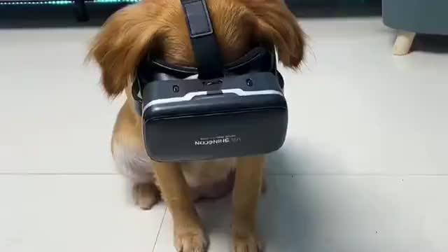 小狗第一次过山车,这高科技看起来小狗还是把握不住!