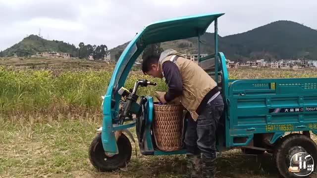 全身上下不到120,每天都有干不完的农活,林哥有的忙了