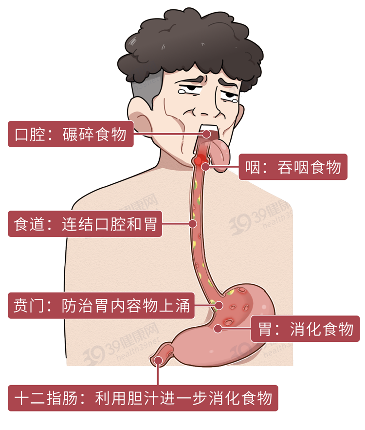 胃部烧心反酸怎么治?医生教你酸碱中和,搞定胃食管返流