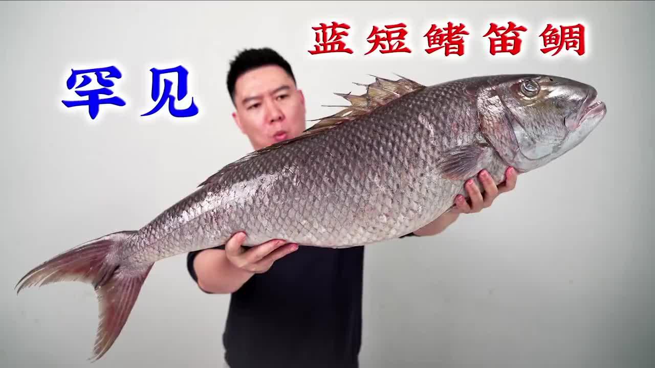 试吃一条20几斤的蓝短鳍笛鲷,一煎一熏,外酥里嫩非常香