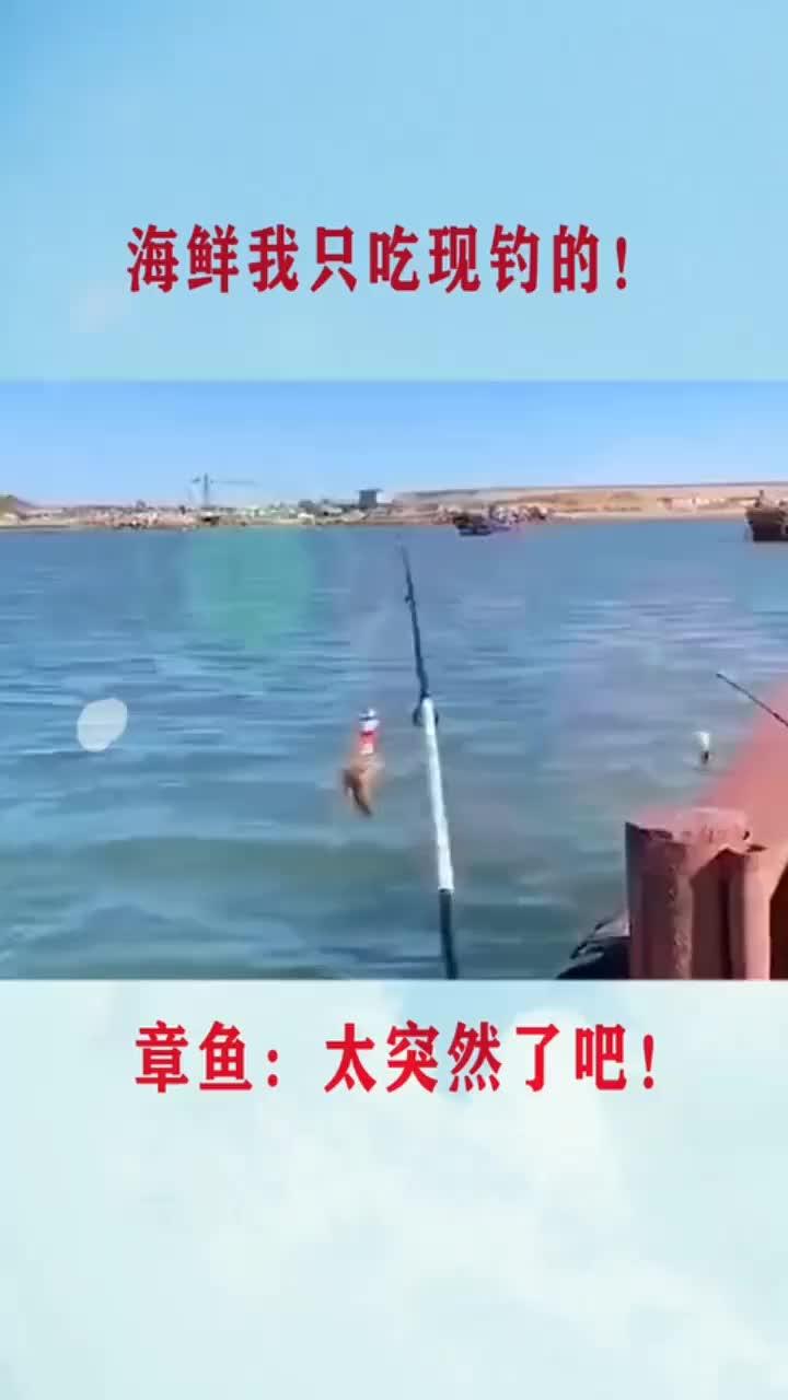 章鱼:我去吃个火锅,晚上就不回来了!