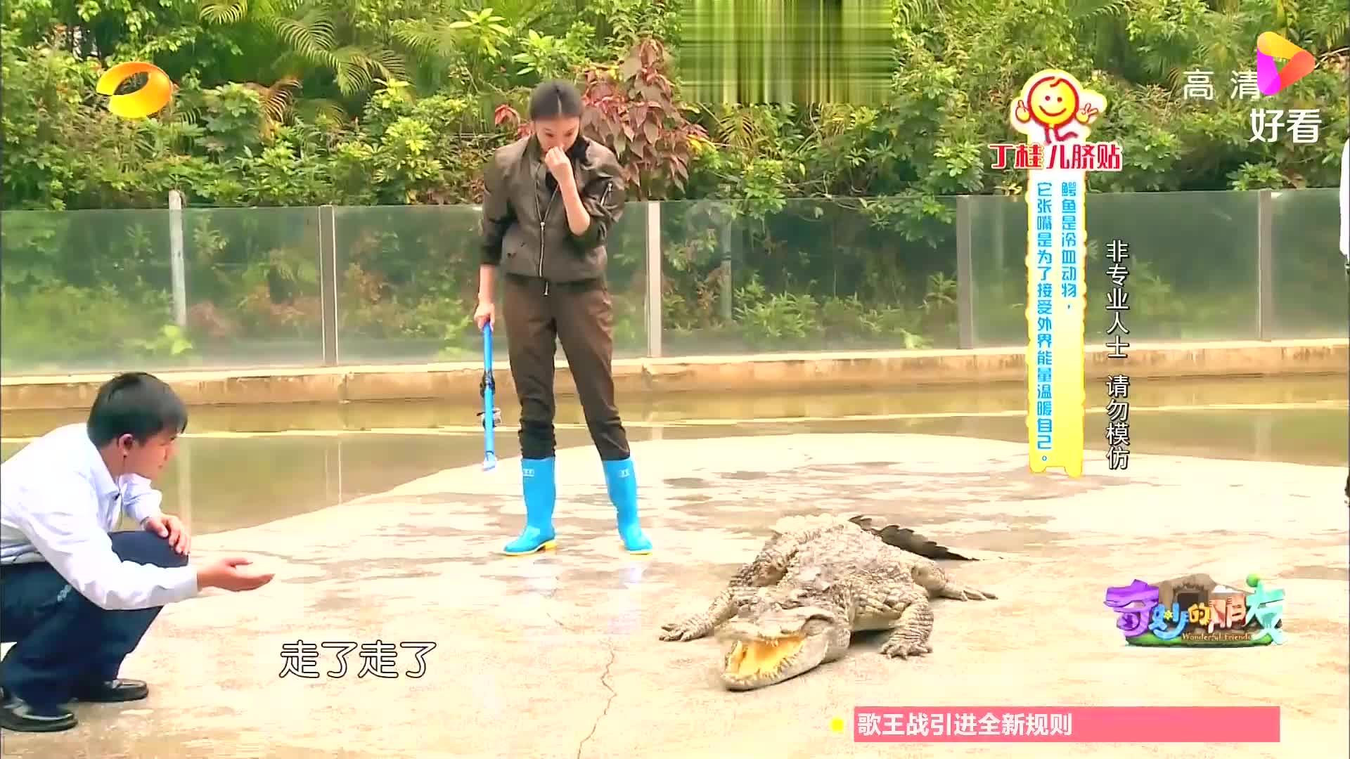 倪妮给鳄鱼刷牙它却跑了,倪妮费老劲又把它拉上来丨奇妙的朋友