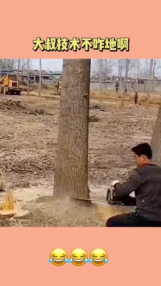一看就是老师傅,锯树从底端开始,安全又便捷