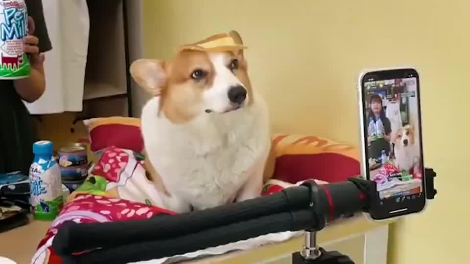 怎么样,是不是稳如老狗,没看出我是被迫的吧
