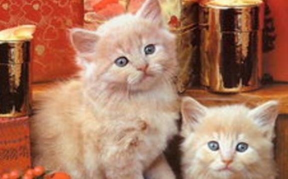 猫砂居然是这样被发明出来的,你知道吗