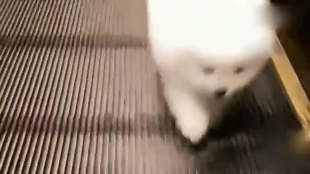 小博美跑不动了,直接坐地上开始耍赖皮!