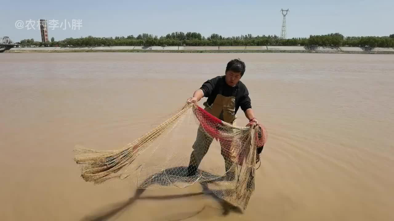 小伙黄河撒网发财了!一网扣中大鲶鱼,随后拖上大甲鱼像黄金一样