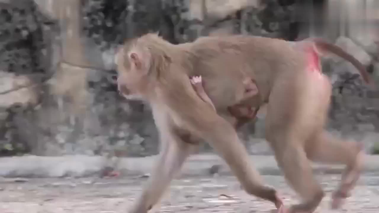这个新生儿猴子宝宝发型,很有特点,也超级可爱