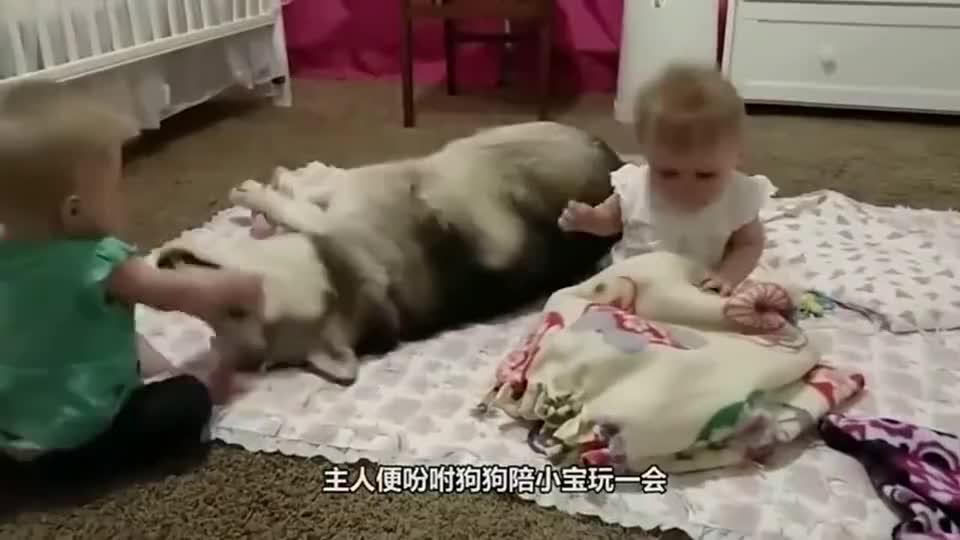 两条小奶狗陪小宝宝入眠,翻身的动作太体贴了!可爱至极
