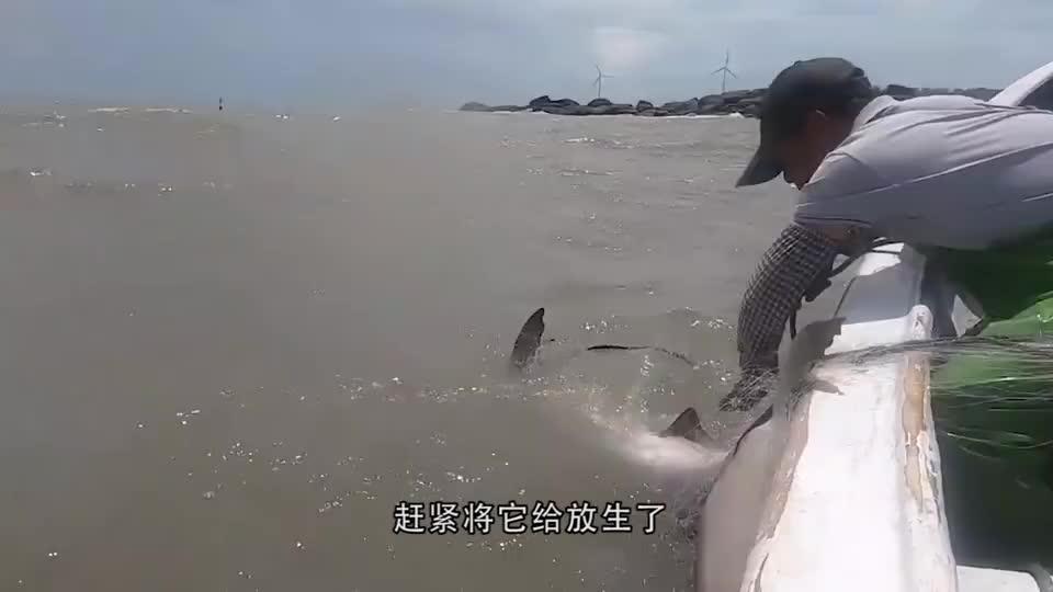 """渔民出海捕到""""龙鱼"""",同伴看后大惊:你个呆瓜,不要命了嗦!"""