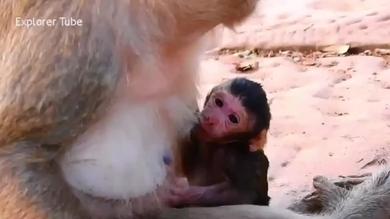 猴子新生儿幸福一刻