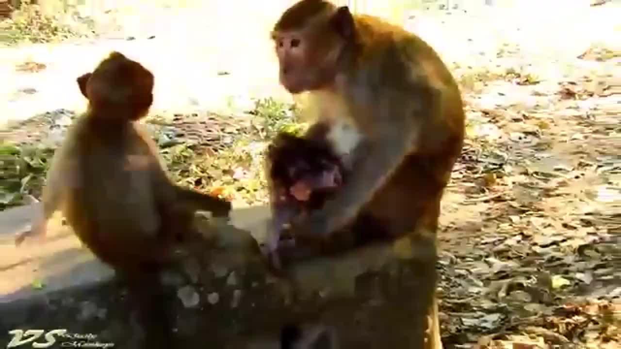 猴妈带着小猴子,猴王忽然回来看它
