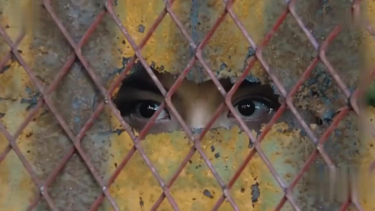 男子被关5年,凭借眼力,就学会了所有技能,并逃出牢笼