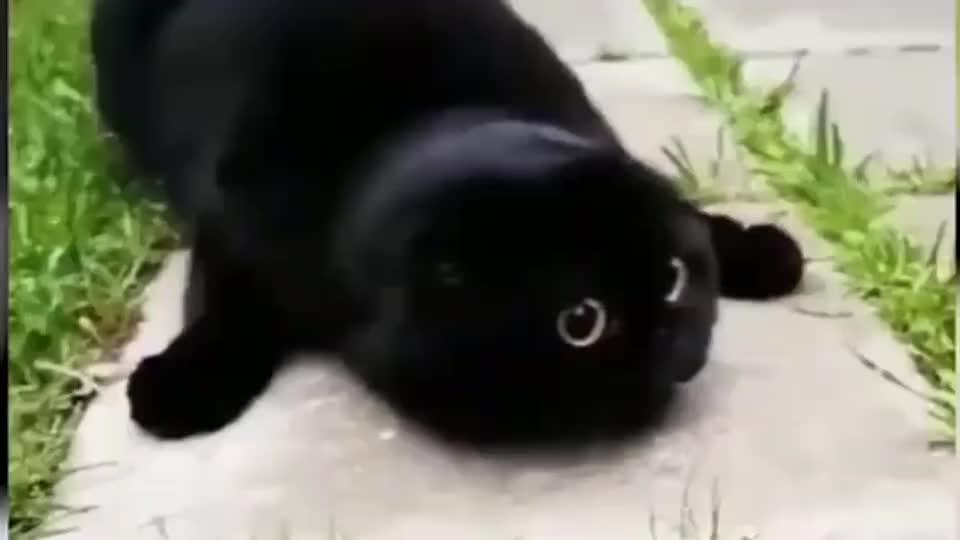 躺着的那只黑猫你过分了啊