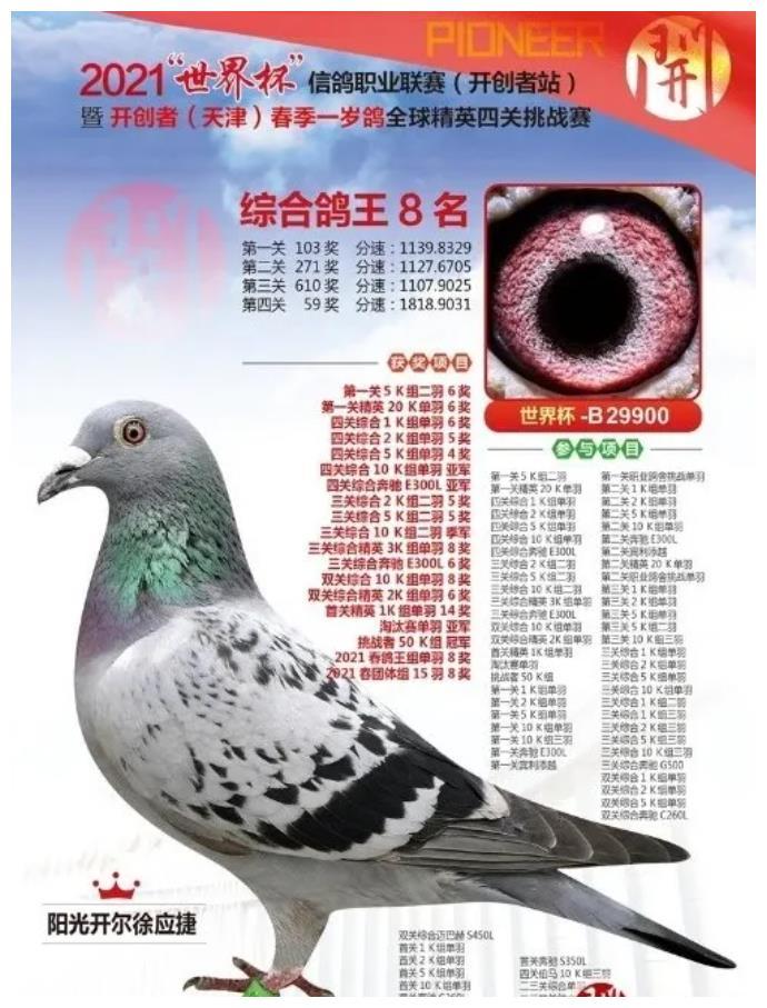200万的赛鸽诞生,阳光开尔徐应捷鸽舍第一种雄252全姐妹直女!