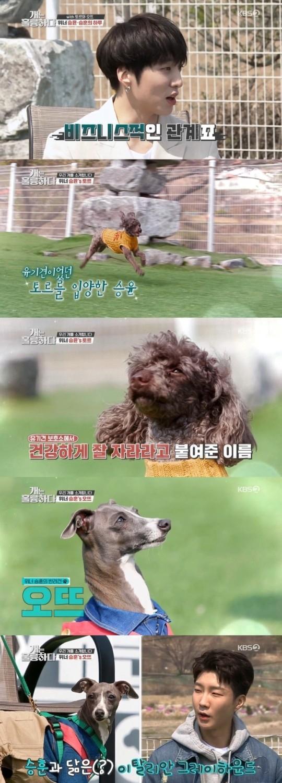 WINNER姜昇润&李昇勋在节目《狗很棒》中公开了与爱犬的相遇 也有温暖人心的故事