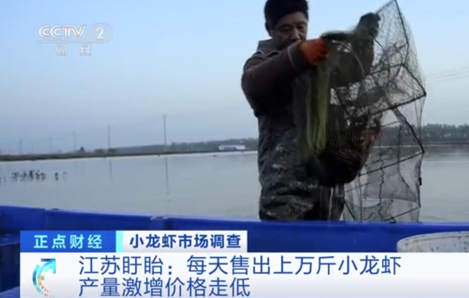 小龙虾一斤降价十几元 养殖户:养小龙虾年赚三十万