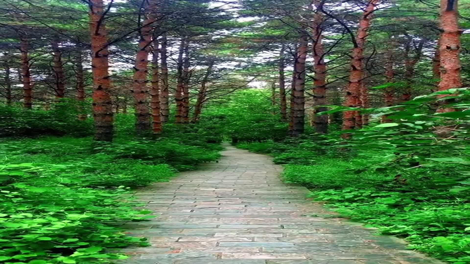 放空一下,听林间的百鸟歌唱,闻林间的花香扑鼻……