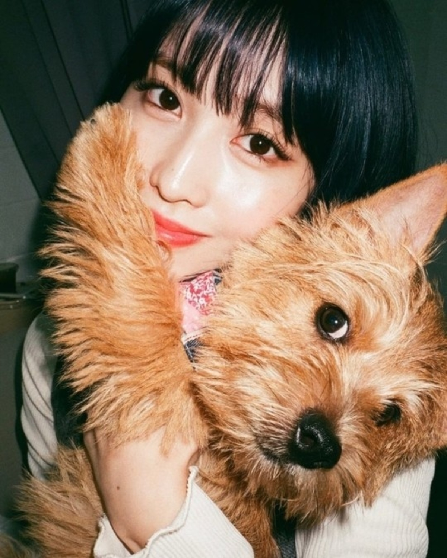 TWICE平井桃拥抱爱犬 超可爱的贴身镜头让粉丝怦然心动
