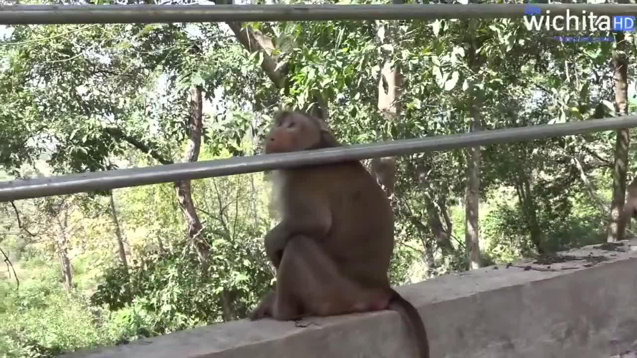 母猴生下一只混血猴宝宝,盯着看了半天,怎么不像我呢?