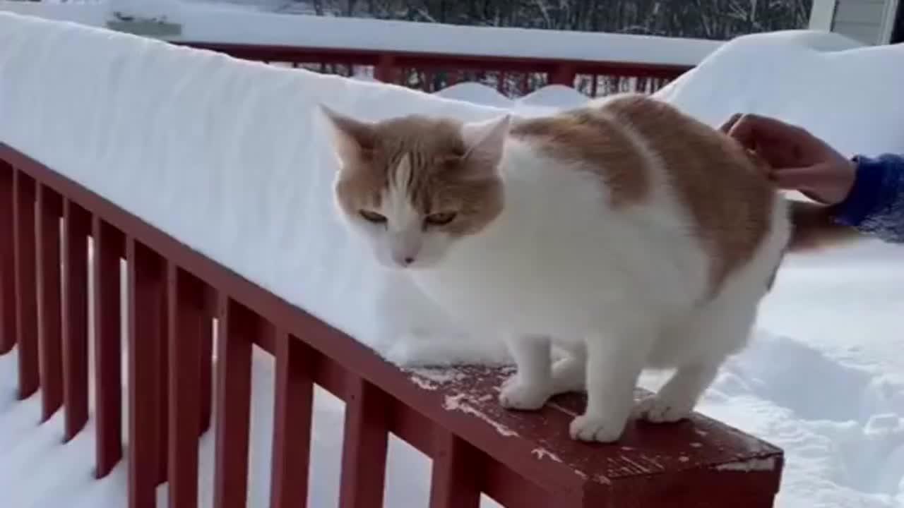 橘猫一下没了,主人默默收回想抓猫的手