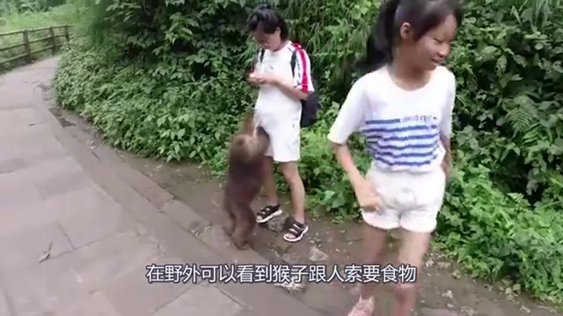 做梦都想不到,猴子竟然做出这种损事,要不是镜头拍下都被骗了!