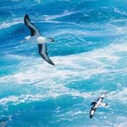 南海的浪涛