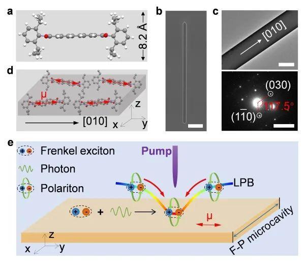 科研人员在有机微晶中实现室温玻色-爱因斯坦凝聚态