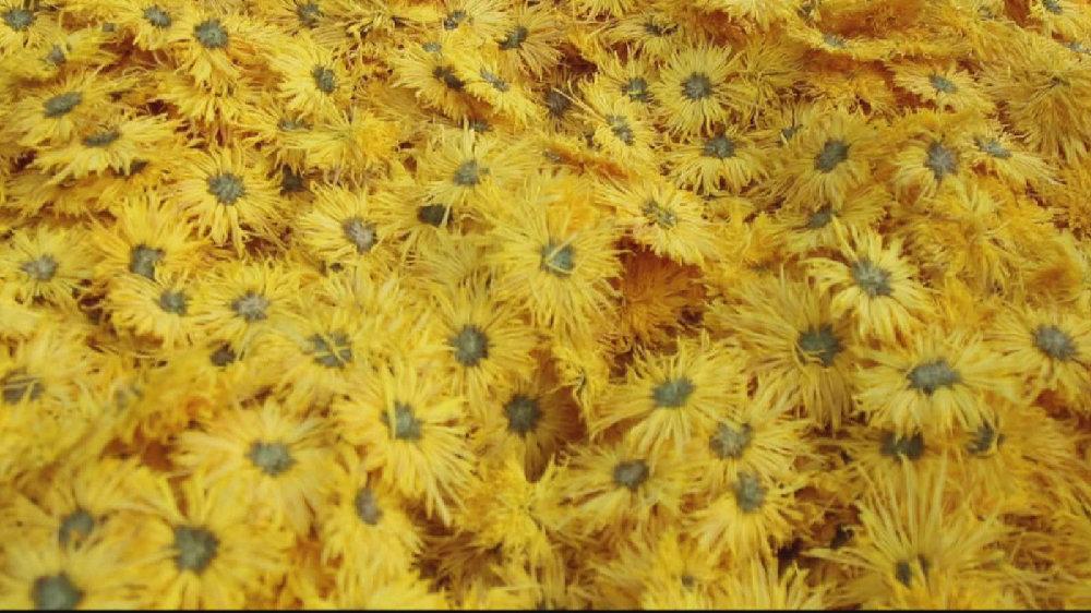 荒山野岭变美丽花海,曾经的贫困村,靠种花赚翻了!