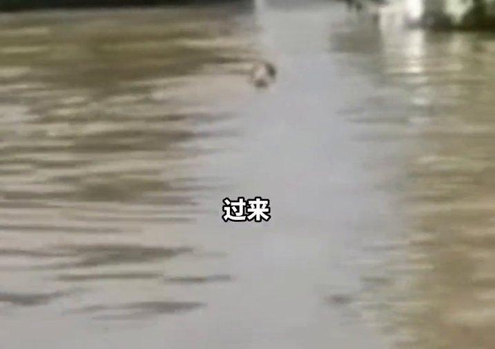 救援人员洪水中发现狗狗 狗狗应声拼命游来不停亲昵表示感谢