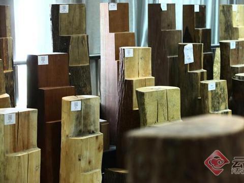 【网聚云南 相约COP15】走进西南林业大学木材标本馆——探秘云南森林多样性