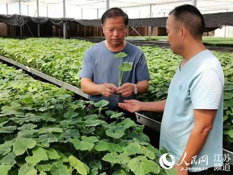 民生百事践初心丨江苏泗洪:有了关爱指导团农民创业不再难